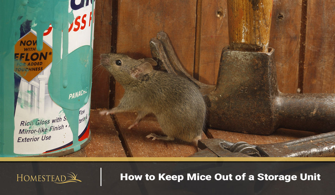 How to Keep Mice Out of a Storage Unit